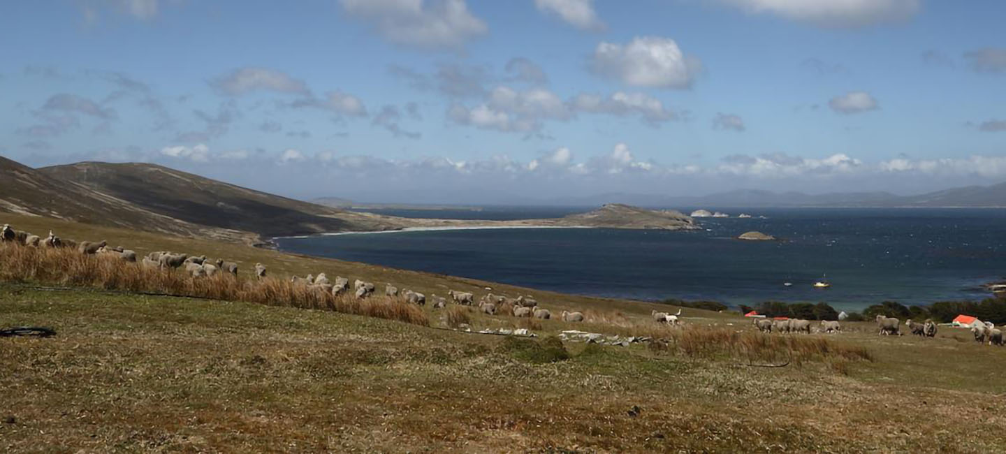 falklands carcass island